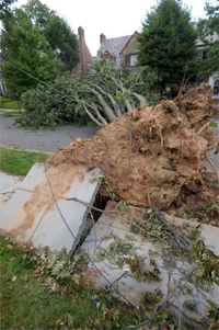 Damage from the derecho storm